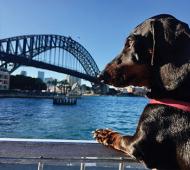 'Make Sydney more dog friendly'