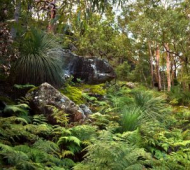 Help Regenerate Our Bushland