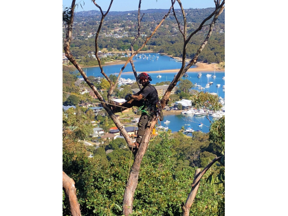 Tree Pruning -Tree Thinning -Tree Removal -Tree Lopping -Tree Transplanting -Stump Grinding & Emergency Assistance