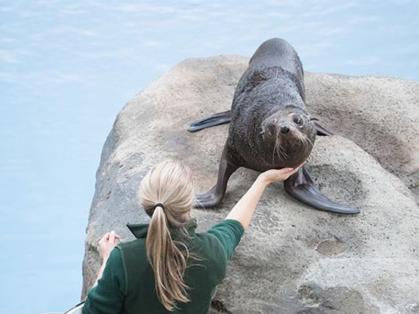 Seal Show at Taronga Zoo