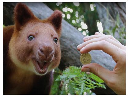 Birthday Offer: Visit Taronga Zoo for $1
