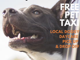Free Doggy Day Care Pet Taxi!
