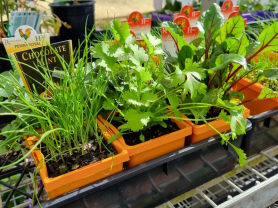 100mm Pot of Herbs for $5.95 Each
