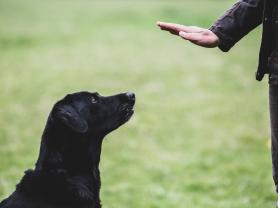 20% off 2 Hr Dog Training Consultation