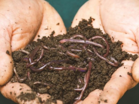 Composting and Worm Farm Workshop