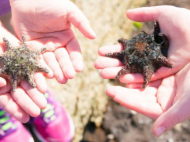 Kids on the Coast Junior Marine Biology