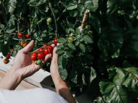 Maintaining Your Organic Veggie Garden Workshop