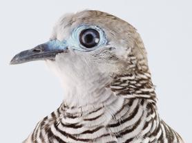 MAG&M Society in Conversation Series: Birdland
