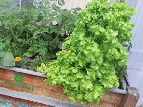 Self-watering Garden Beds Workshop