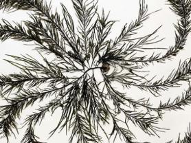 Seniors' Festival - Seaweed Arboretum exhibition tour