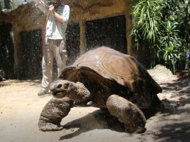Taronga Zoo Keeper For A Day For Adults