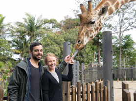 Giraffes Encounters at Taronga Zoo
