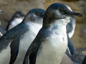 Penguin Keeper Talk