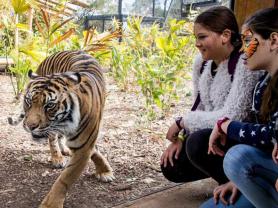 Taronga Zoo Friends Annual Pass