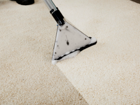 Professional Carpet Cleaning only $255